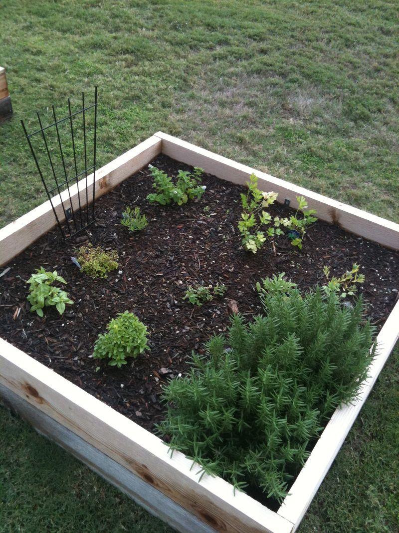 Herb Garden 10.27.11
